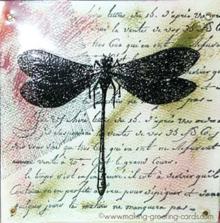 acetate dragonfly card